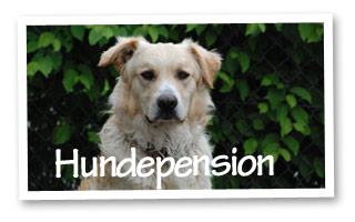 hundepension 310x200